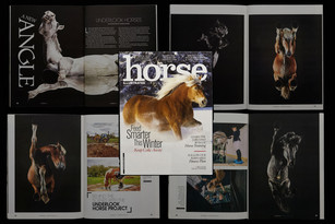 HORSE ILLUSTRATED