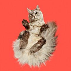 Under-Cats-Colour