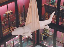 Crocodile suspendu (Cocodril suspès), 2000