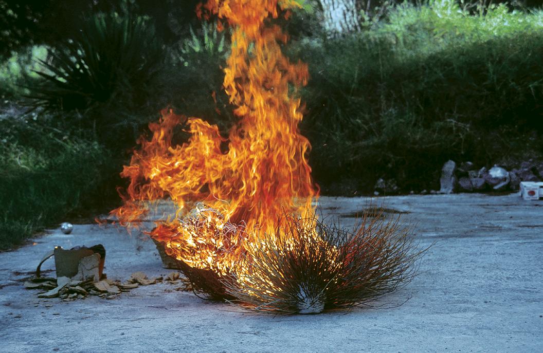 arbustes: branches: feu