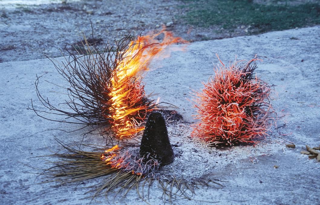 arbustes: branches: feu 1