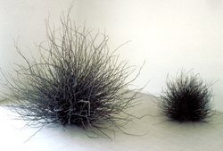 arbustes :branches