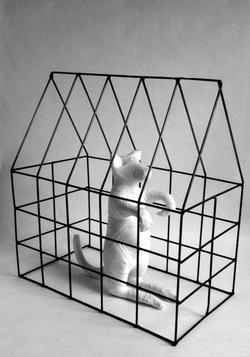 Chien mexicain (Gos mexicà), 2000