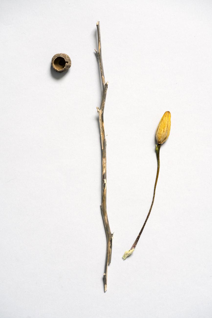 botanique8