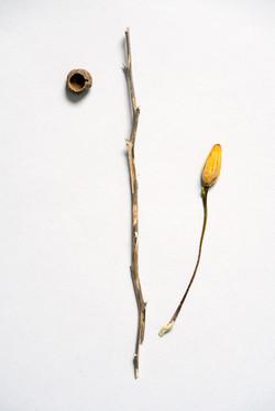 botanique 8