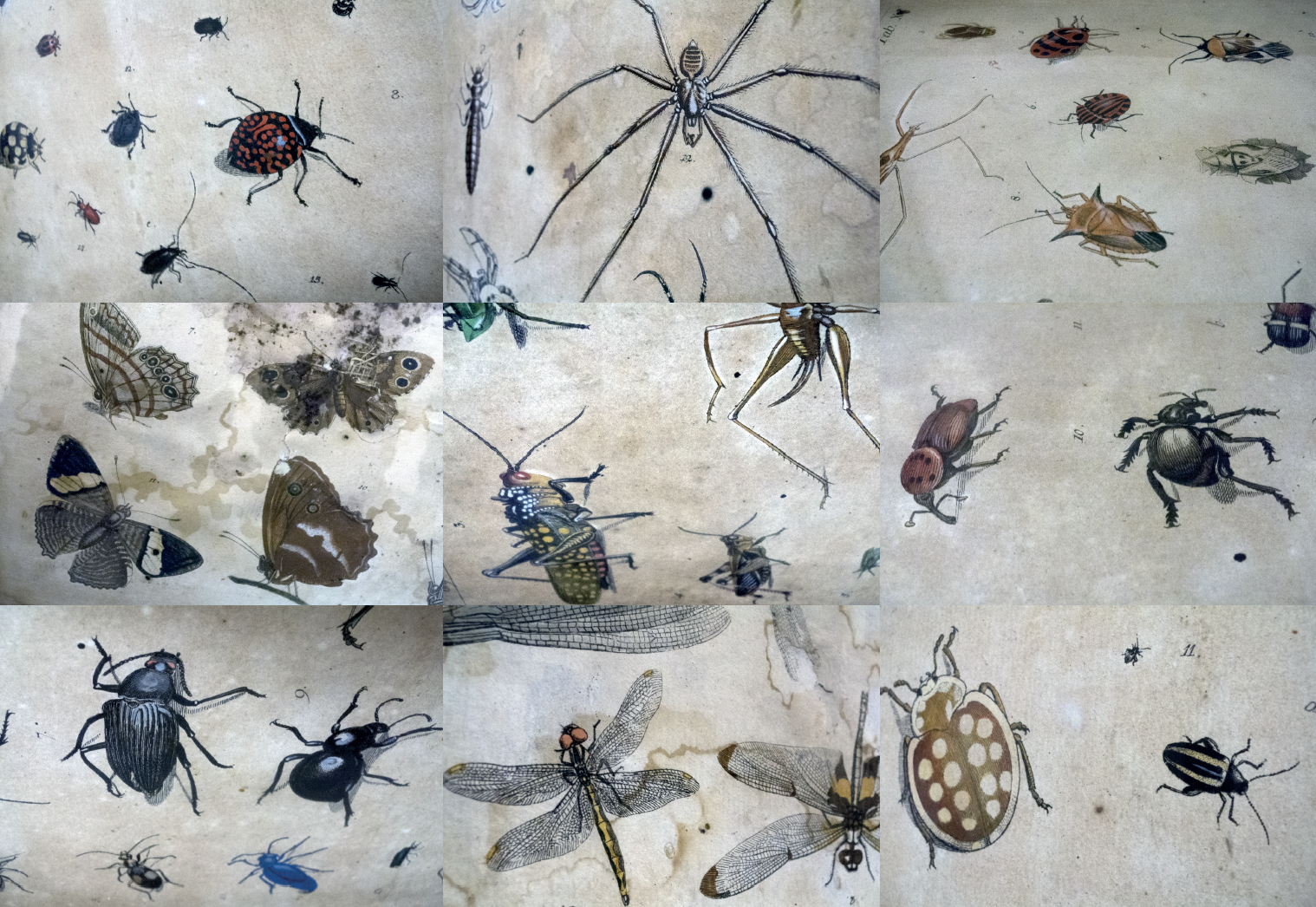 insectes 2 sylvie bussieres