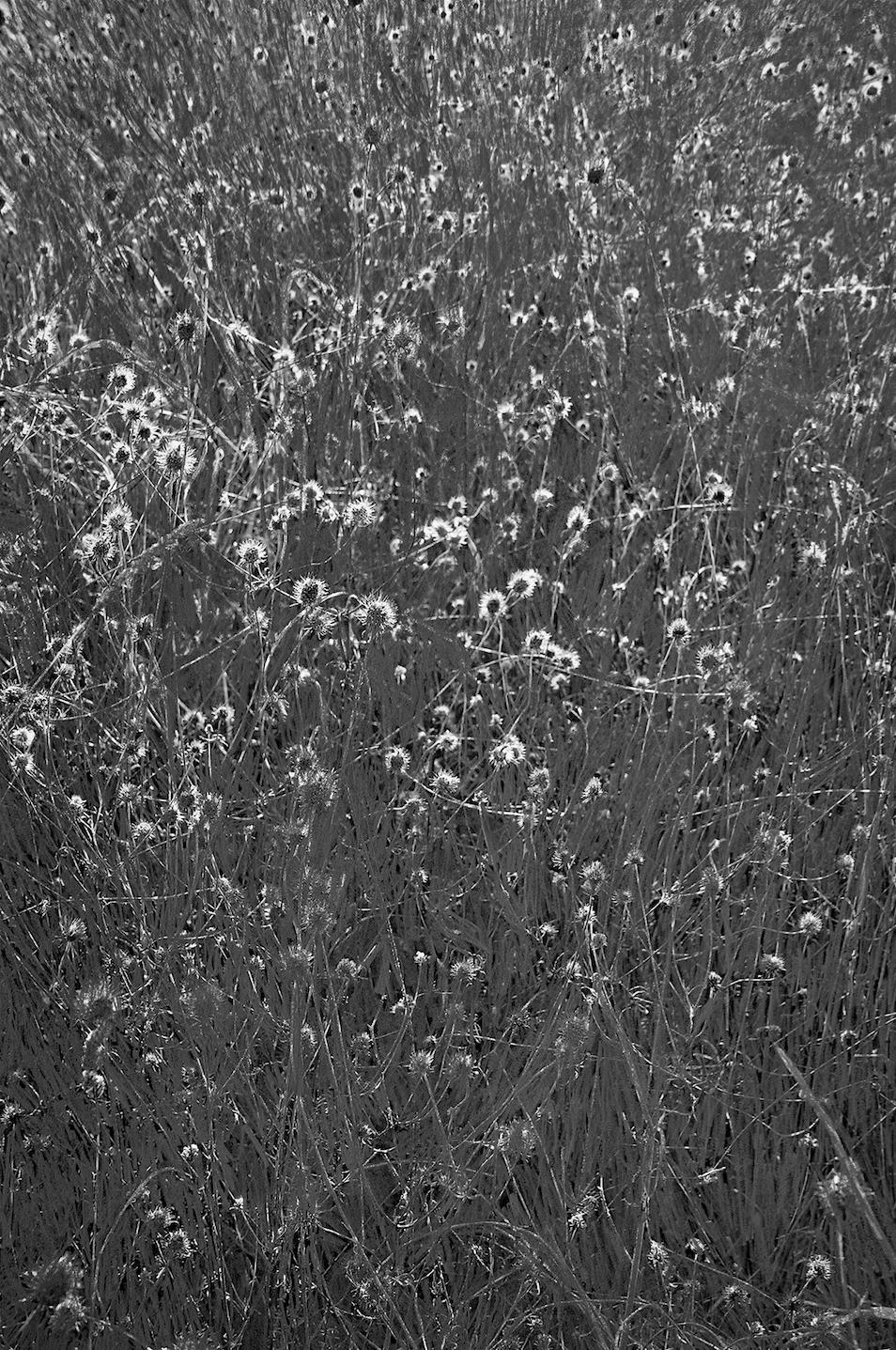 males herbes 11
