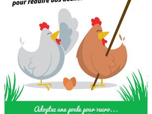 Adoptez des poules !