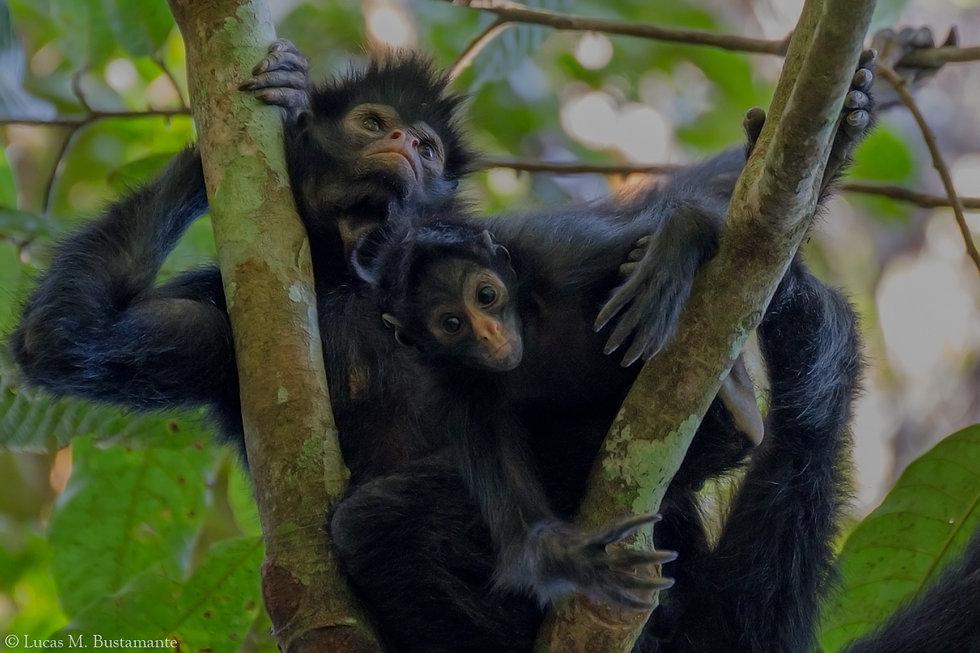 Fauna - Mammals - Lucas Bustamante (21).