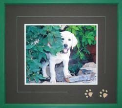 puppy paws green.jpg