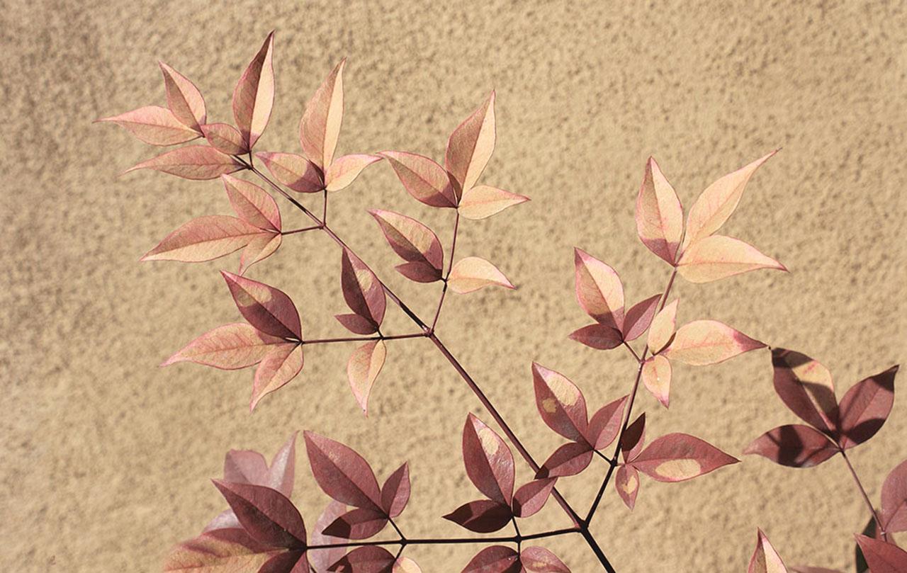 Adobe Leaves.jpg