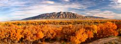 Bosque Autumn.jpg