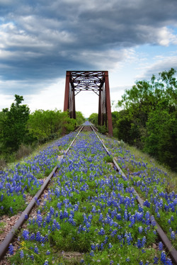 Bluebonnet Trestle