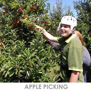 Apple picking.jpg