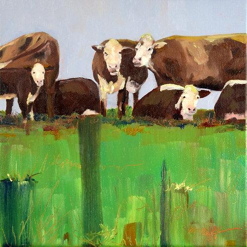 COWS AT SPILLER FARM