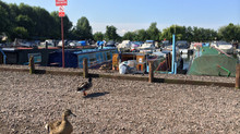 Leicester Marina - a home to an abundance of wildlife