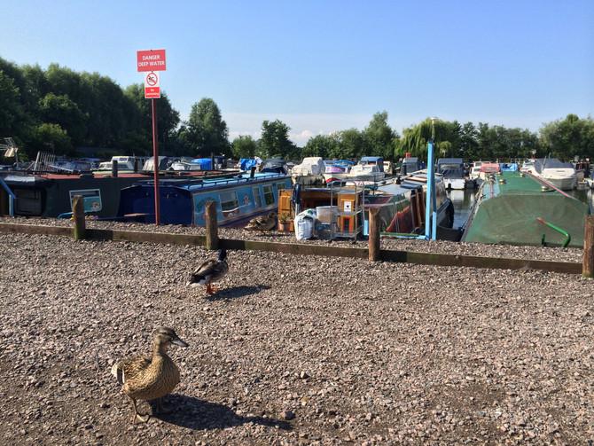 Leicester Marina - a home to an abundance of wildlife