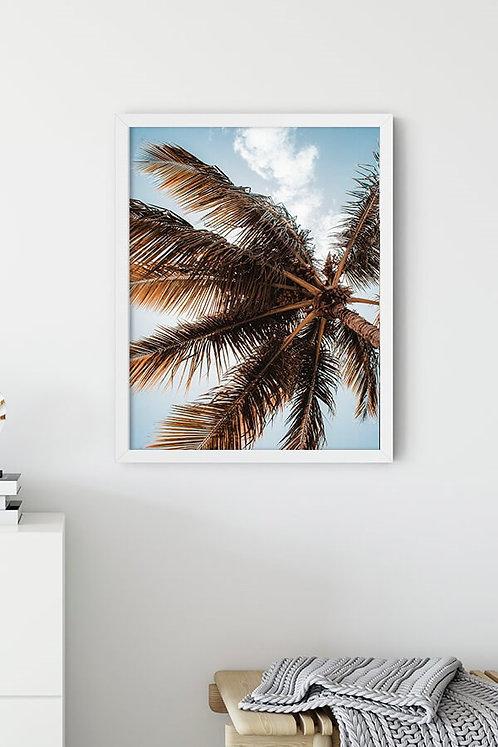 Kahverengi Palmiye Tablo Poster