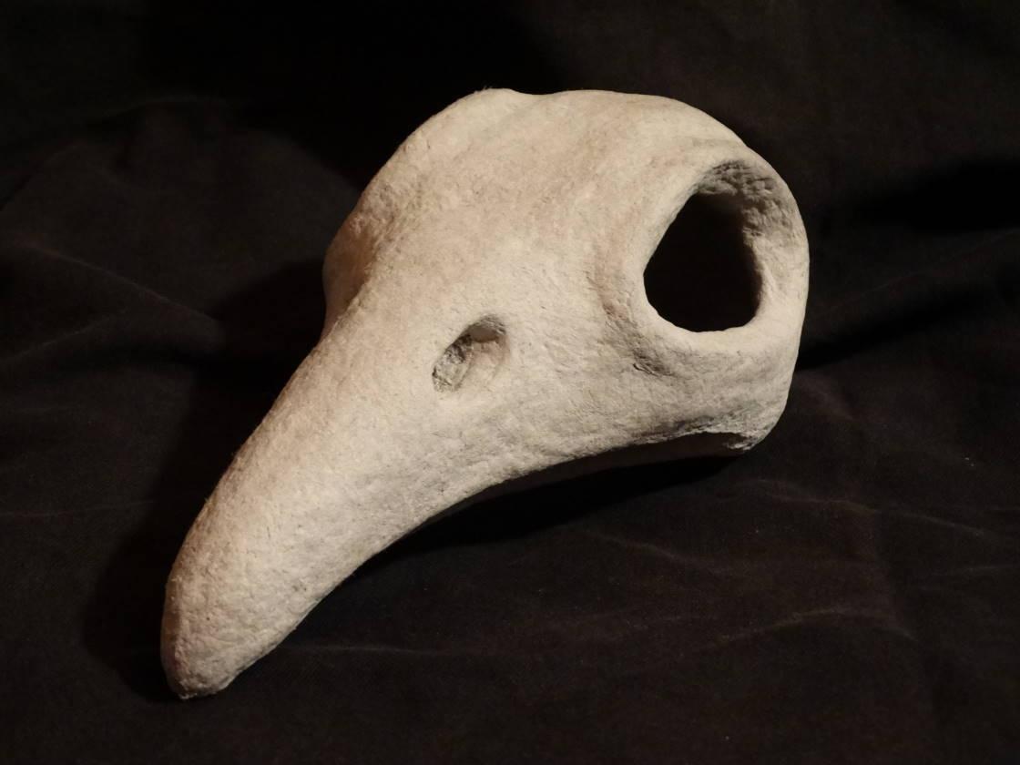 Crâne de piaf