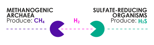 Pacman Graphic (1).png