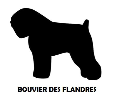 5Silhouette Sample - Bouvier Des Flandre