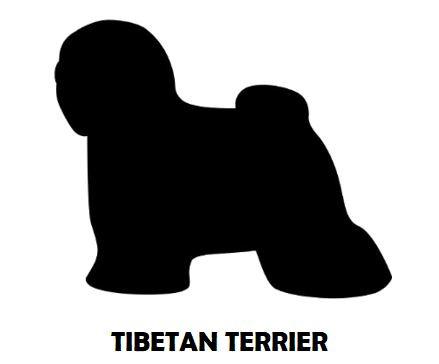 7Silhouette Sample - Tibetan Terrier.JPG