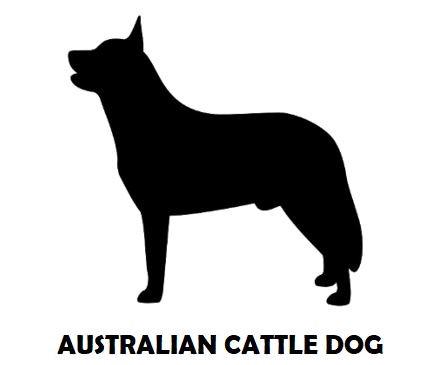 5Silhouette Sample - Australian Cattle D