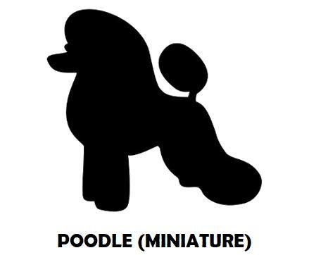 7Silhouette Sample - Poodle (Mini).JPG
