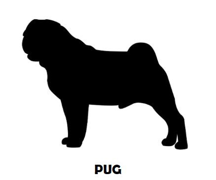 1Silhouette Sample - Pug.JPG