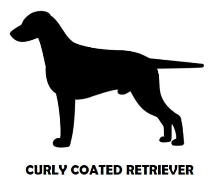 3Silhouette Sample - Curly Coated Retrie