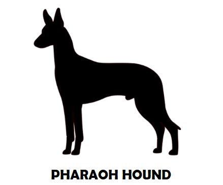 4Silhouette Sample - Pharaoh Hound.JPG