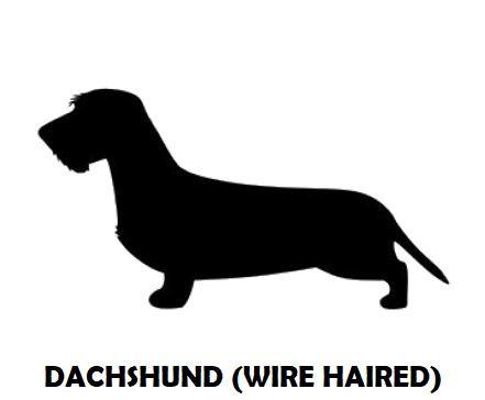 4Silhouette Sample - Dachshund (WH).JPG