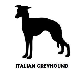 1Silhouette Sample - Italian Greyhound.J