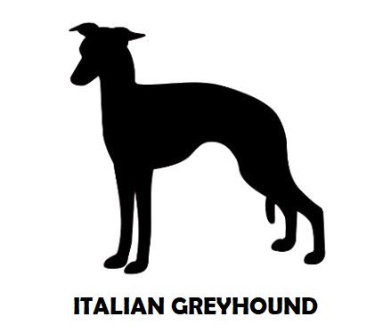 1Silhouette Sample - Italian Greyhound.J