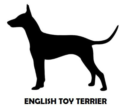 1Silhouette Sample - English Toy Terrier