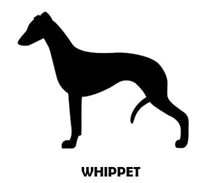 4Silhouette Sample - Whippet Standing.JP