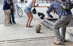 TBB-quokka-photo-madness.jpg