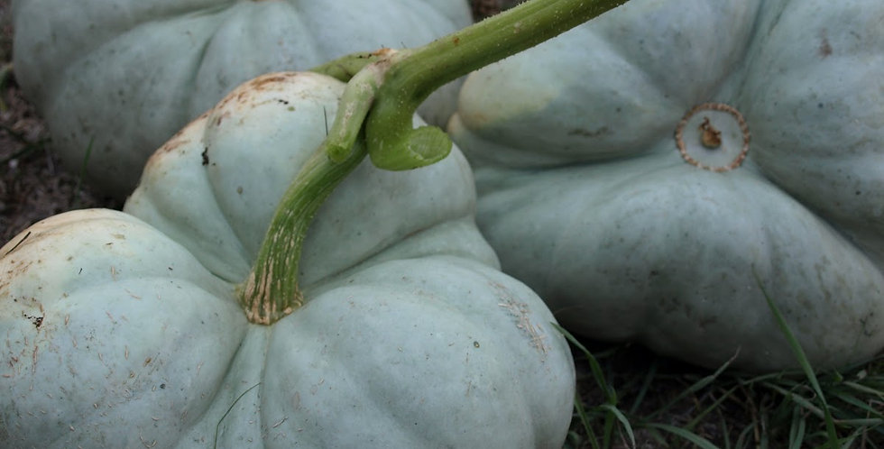 Pumpkin - Triamble