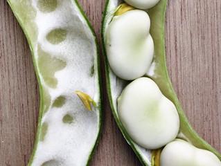 Heirloom, hybrid and GM seeds.