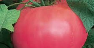 Tomato - 'Pink Brandywine'