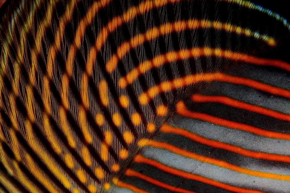Galeria Padrões e Texturas