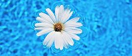 fleur dans piscine.jpg