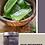 Thumbnail: Aloe Mystery™