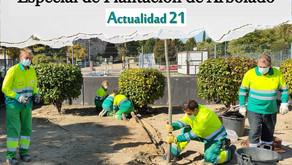 La Concejalía de Medio Ambiente pone en marcha un Plan Especial de Plantación de Arbolado