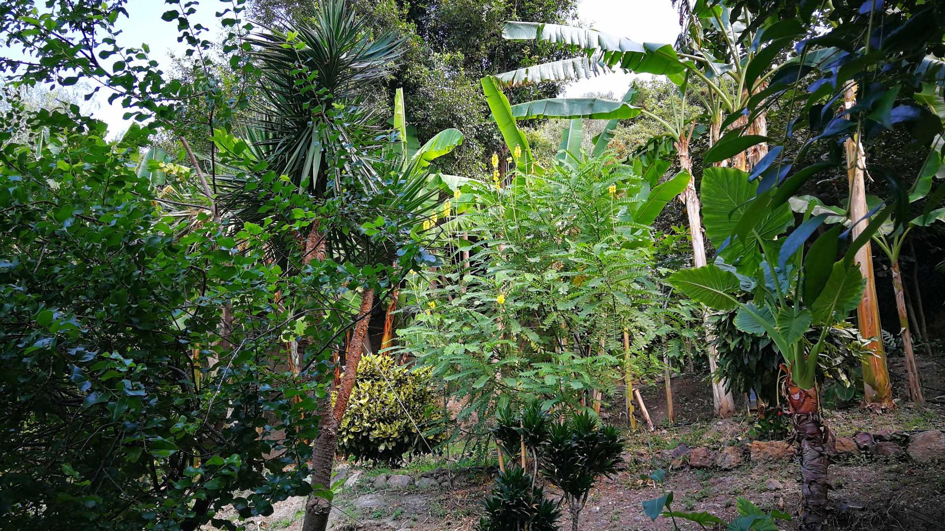 Botanical park and gardens