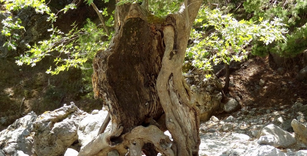 In Samaria gorge