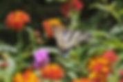 Botanical gardens of Crete