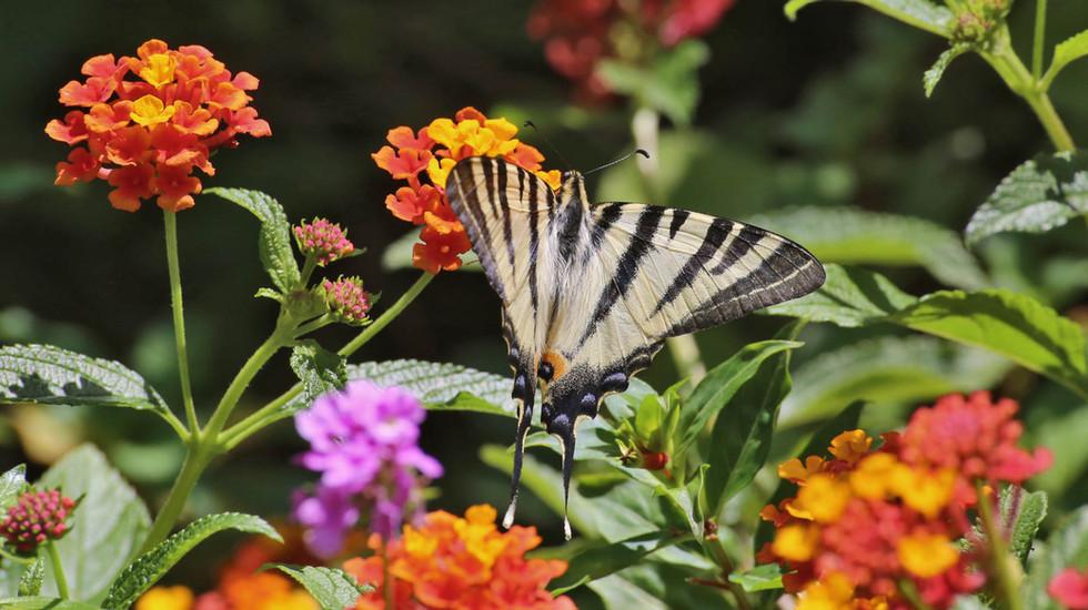 Botanical park crete