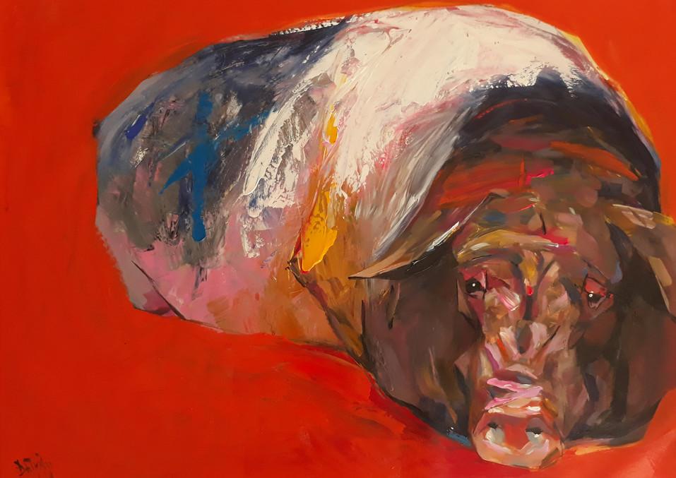 Vietnamese black pig #2