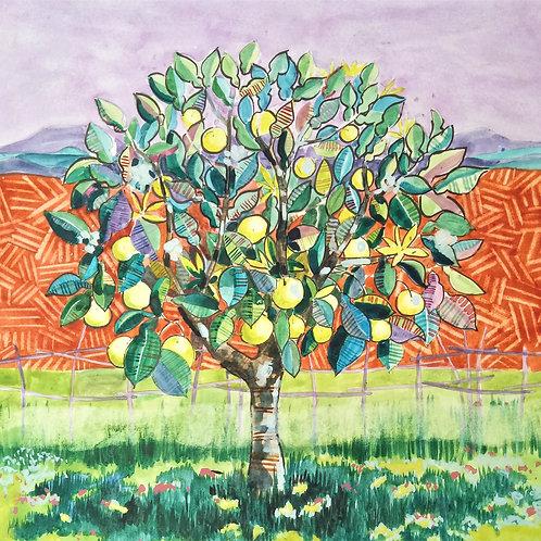 Tree series - Pomelo